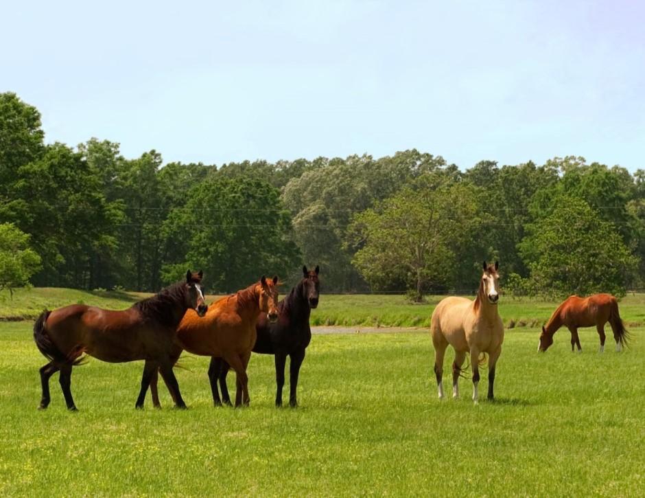 057_Horses in Pasture